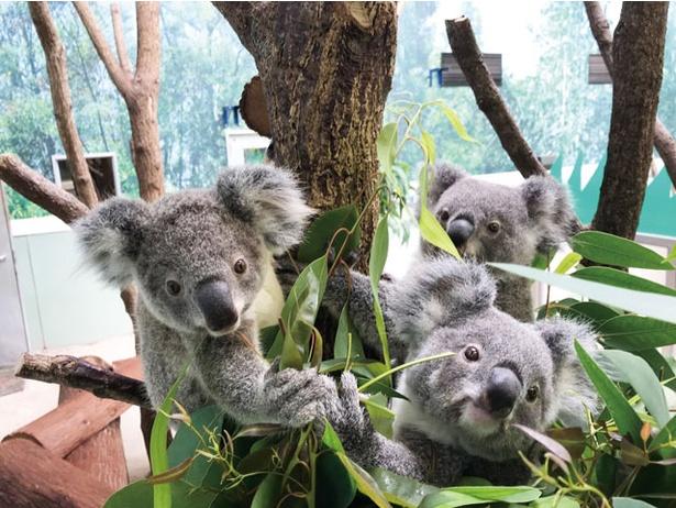 平川動物公園 春の動物公園まつり