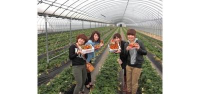 前田いちご園 / 安心安全な完熟いちごが味わえる