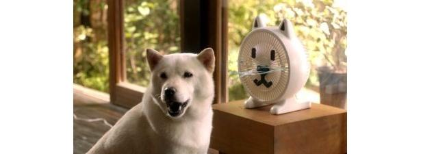 """「白戸家」の新CMは""""お父さん""""のダジャレと可愛い「お父さん扇風機」に注目!"""
