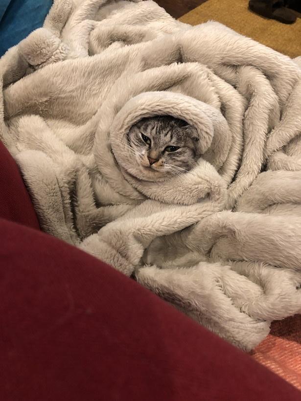 【写真を見る】ぐるぐる巻きの毛布からひょっこり顔を出すネコちゃんがかわいい…