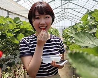 様々な野菜も取り扱う埼玉県の所沢北田農園でいちご狩りを楽しもう