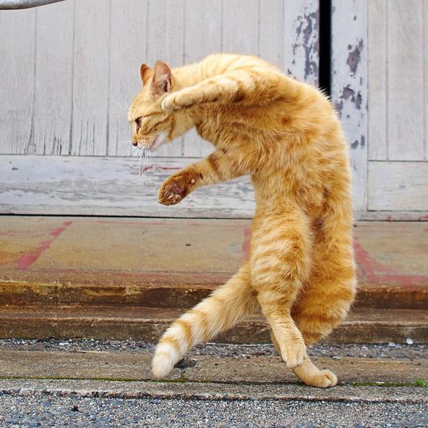 【写真を見る】猫の魅力を様々な観点から感じられる / 「IMS presents ねこがかわいいだけ展」