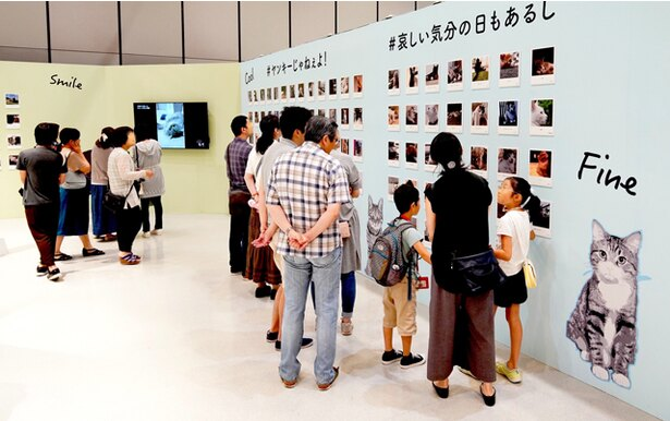 """全国から集まった""""たまらん""""猫写真を多数展示※写真は東京会場の様子 / 「IMS presents ねこがかわいいだけ展」"""