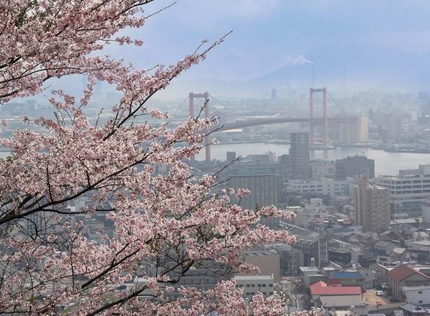 高塔山公園 / 花見の名所として知られる