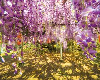 まだ見ぬ景色を求めて!山口県・下関市で立ち寄りたい春のドライブスポット5選