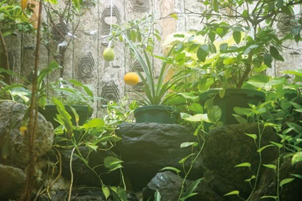 レモンが育つ浴室の熱帯植物園も必見! / 平田温泉