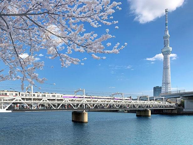 隅田川橋梁と東京スカイツリーが「スカイツリーホワイト」で一体化される(イメージ)