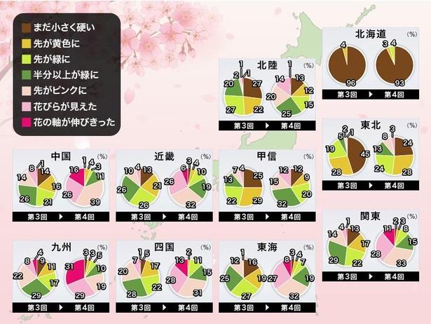 全国の桜の生長状況(情報は2021年3月24日発表  ウェザーニューズ)
