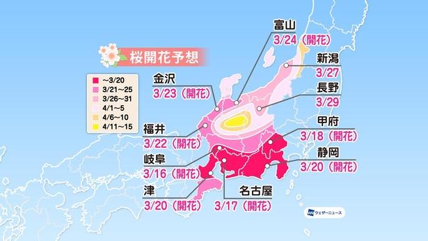 中部地方の桜開花予想(情報は2021年3月24日発表  ウェザーニューズ)