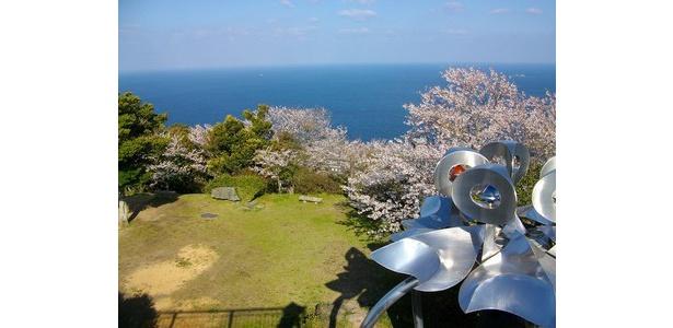 大海原と桜のコントラストが美しい / 権現山展望公園