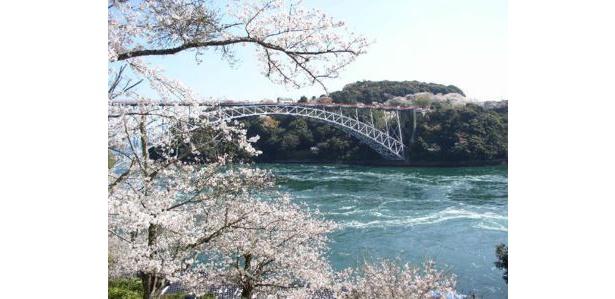 【写真を見る】うず潮も楽しめる桜の名所 / 西海橋公園