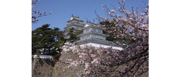 桜越しに島原城が見える / 島原城