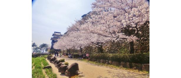 道沿いに桜を眺めながらのんびり散歩を楽しめる / 大村公園(二重馬場)
