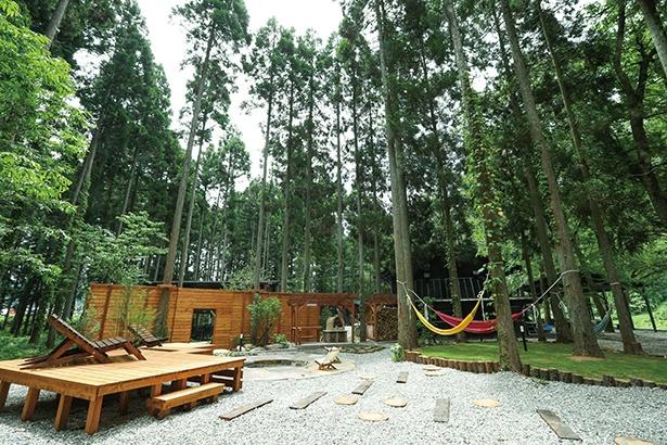 写真左側が星見デッキ、中央にファイヤーサークルがあり、奥にはピザ窯。森の中に溶け込むように作られている