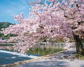 京都の桜名所を一気に回れる!嵐電沿線の寺社で情緒あるお花見