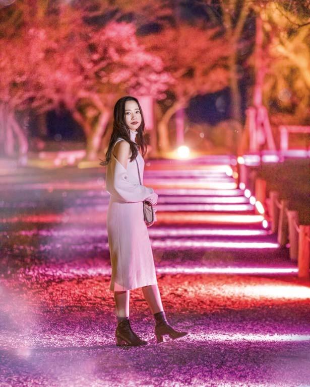 【写真を見る】咲き誇る桜並木のライトアップ/元離宮二条城