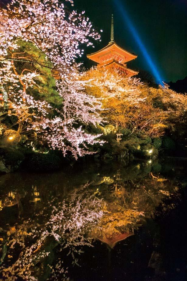 放生池周辺から見上げる高さ約31mと日本最大級の三重塔や、本堂などを囲むように咲く桜を美しく照らし出す/清水寺