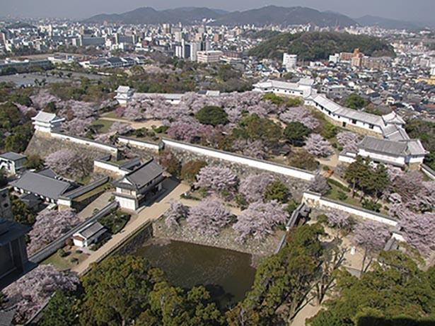 【写真】大天守からの桜の絶景