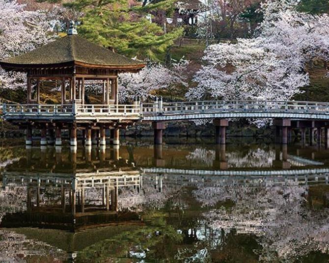 奈良公園のお花見スポットを徹底ガイド!ベストルート丸わかり