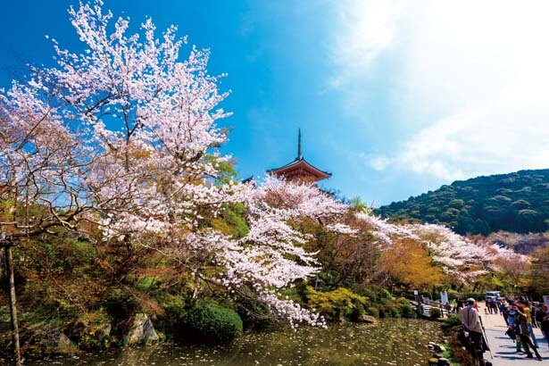 放生池。高さ31mを誇る日本最大級の三重塔を放生池周辺から見上げると、見事な桜と木々の緑、そして赤い塔の鮮やかなコントラストが楽しめる/清水寺