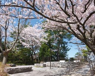 <2020年九州お花見ガイド>福岡市内のおすすめお花見スポット3選