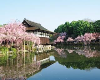 のんびり散策しながら道沿いの桜をめでる!岡崎~哲学の道で桜を楽しむスポット5選