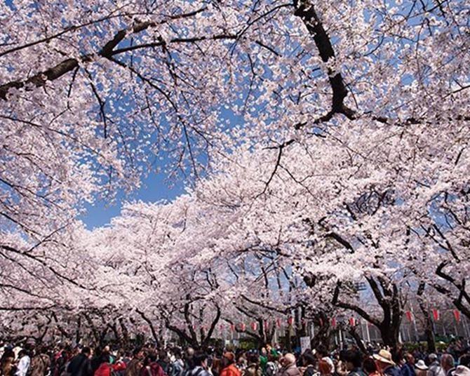 上野恩賜公園のお花見攻略法!立ち寄りグルメも大充実