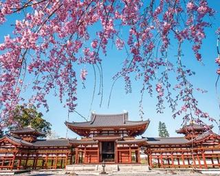 川沿いに見どころが点在!京都・宇治周辺の桜スポット3選
