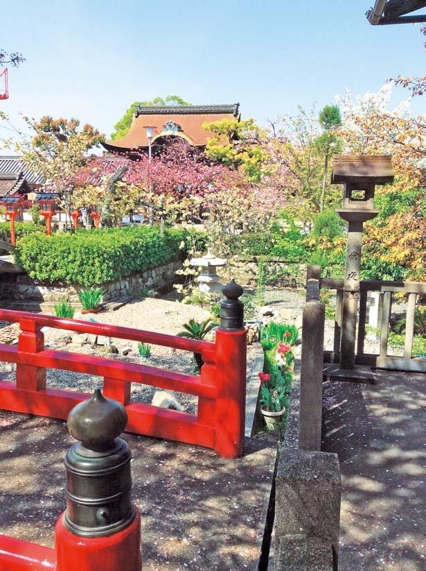 朱色の灯籠が並ぶ境内が八重咲きの桜で華やぐ/六孫王神社