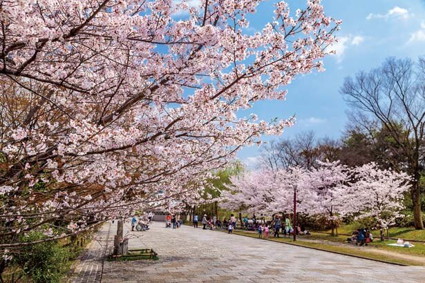 芝生広場や雑木林など、広い園内にさまざまな桜が点在する/梅小路公園