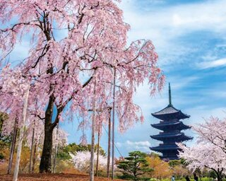 観光の拠点駅から徒歩圏内の名所!京都駅周辺の桜スポット4選