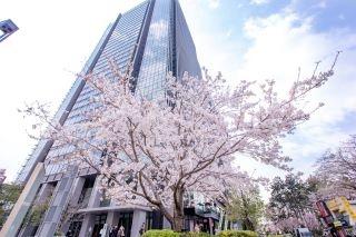 都心の桜スポット! 飯田橋サクラテラスで「桜フェア」を開催