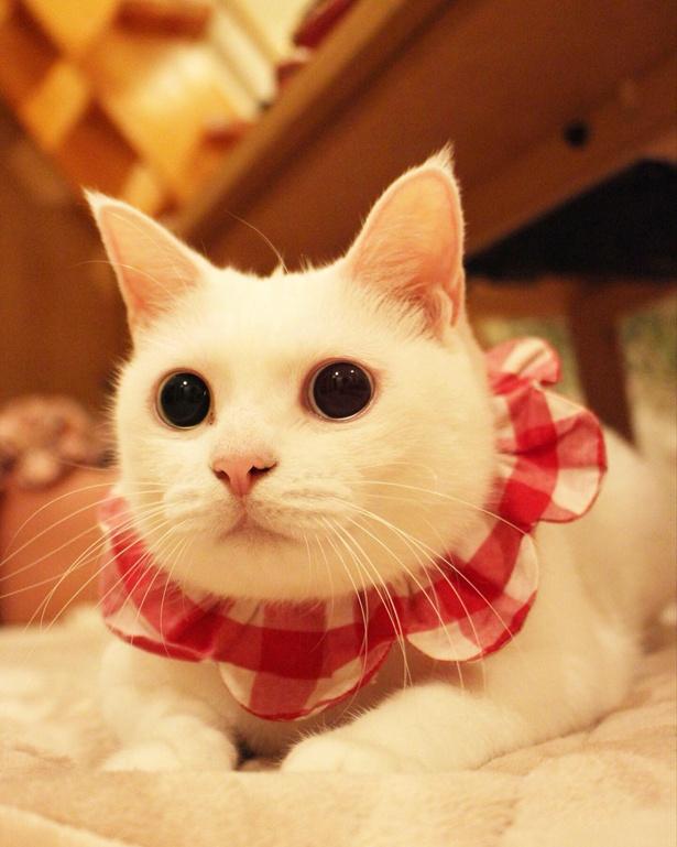 きゅるんとした瞳で見つめるコトちゃん