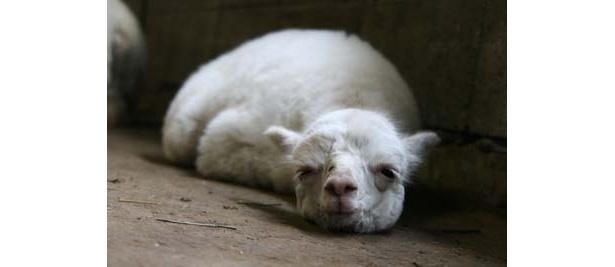 すやすや眠る姿もかわいい