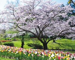 目の前いっぱいに春の絶景を楽しめる、浜松で行きたい花の名所3選