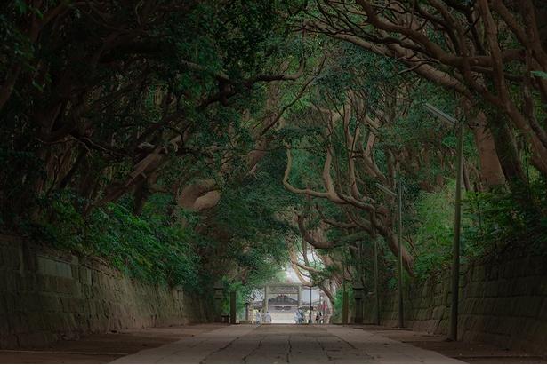 パワースポット賞を獲得した「古木が生い茂る樹叢」(投稿者:Muneki Iida)【酒列磯前神社、茨城県ひたちなか市】
