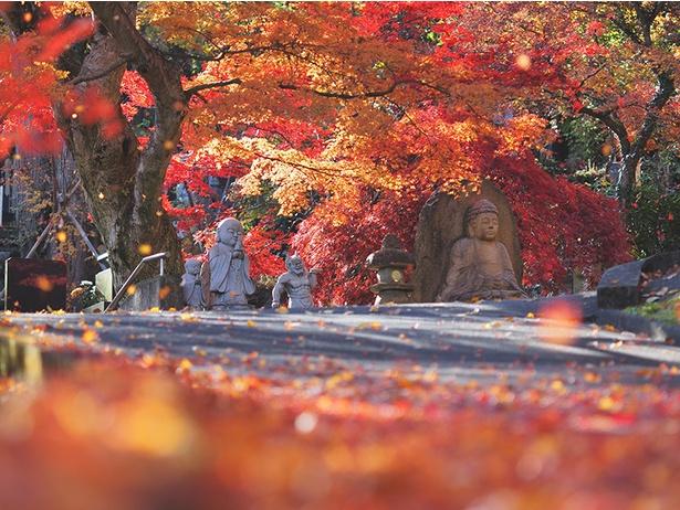 秋色賞を獲得した作品名「秋染まる永源寺」(投稿者:Sho Irokawa)【永源寺、茨城県大子町】