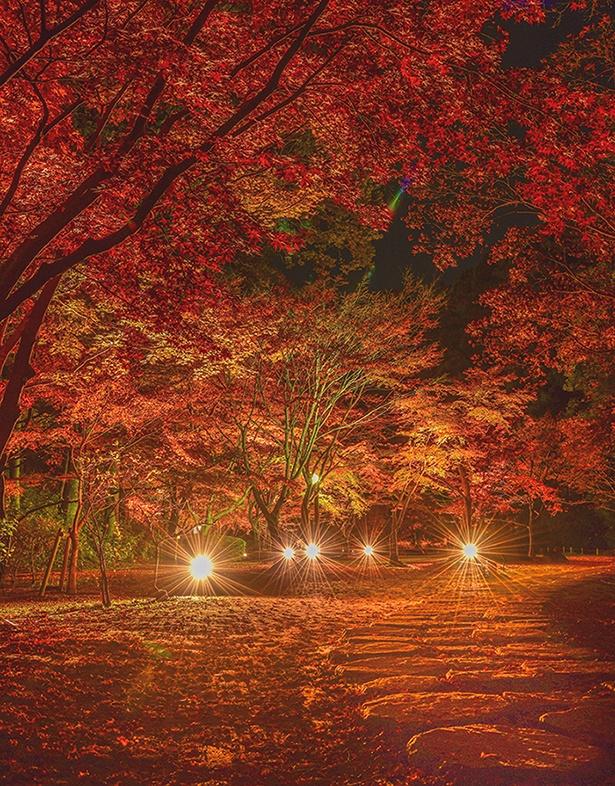 秋色賞を獲得した「紅の世界」(投稿者:Kunikunimania)【偕楽園もみじ谷、茨城県水戸市】