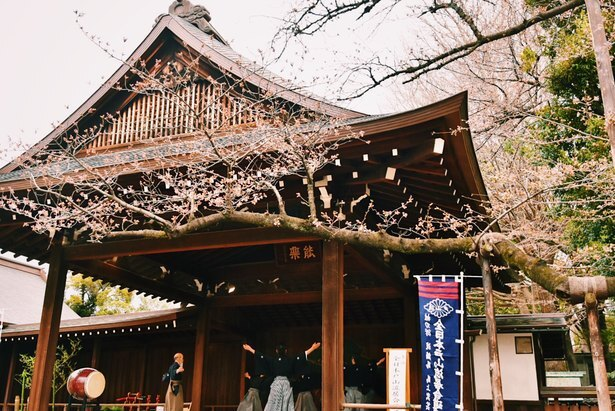 靖国神社の能楽堂の脇にある桜が東京の標本木(写真は2018年の様子)