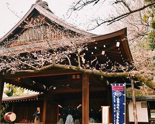 東京で桜が開花 東京の観測史上最速記録を2日更新