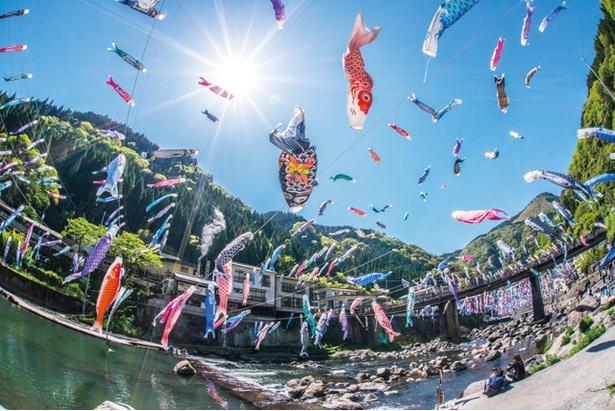 杖立温泉 鯉のぼり祭り / 約3500匹のこいのぼりが、杖立川の空を泳ぐ姿は圧巻