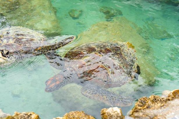 敷地内ではイルカのほか熱帯魚やウミガメも間近に見ることができる