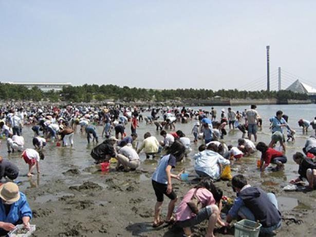 横浜市唯一の海水浴場で開催される潮干狩り