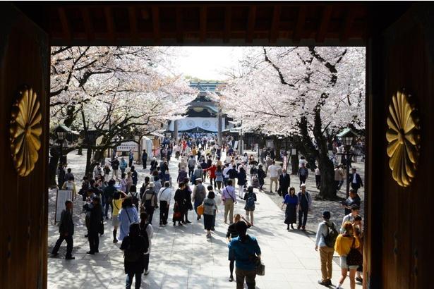 【中止】靖國神社の桜―「さくらフェスティバル」