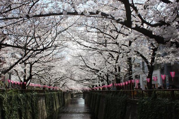 【中止】目黒川の桜―「目黒イーストエリア桜まつり」