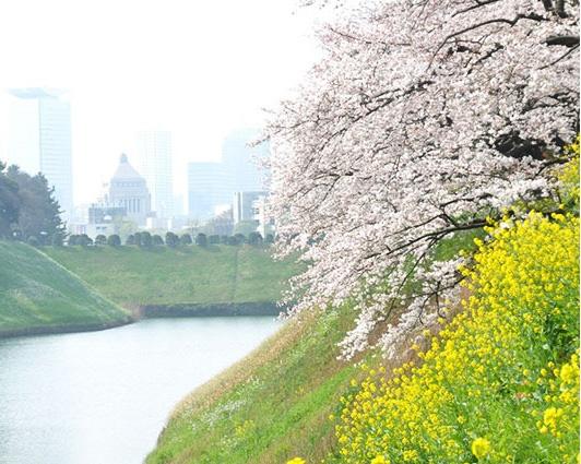 千鳥ヶ淵、目黒川、上野公園…東京都内の大型桜祭り・お花見イベントの中止情報まとめ