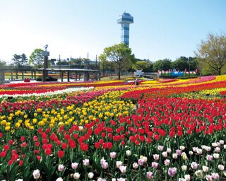 花や大自然に囲まれる!春に行きたい、岐阜の絶景スポット4選