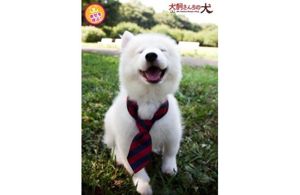 """初日から先着順、数量限定でプレゼントされる""""笑う犬の生写真"""""""