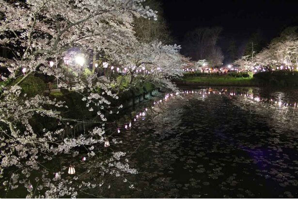 ライトアップされた桜と水辺のコントラストがとても美しい