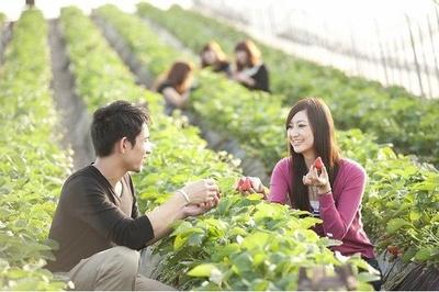 【写真】「いちごグランプリ」受賞のいちごをたっぷり味わえる/深作農園